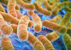 Power of Balanced Gut Mocroflora